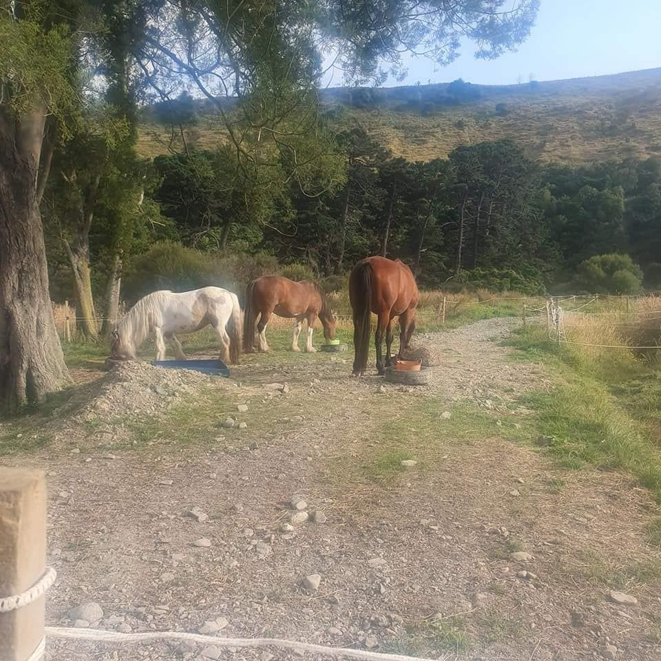 Secluded Lifestyle for sale with horse set up if needed with river photo 6