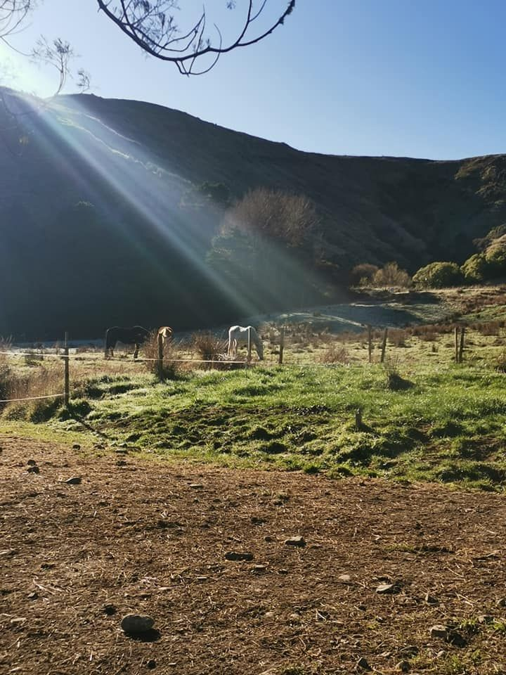 Secluded Lifestyle for sale with horse set up if needed with river photo 4
