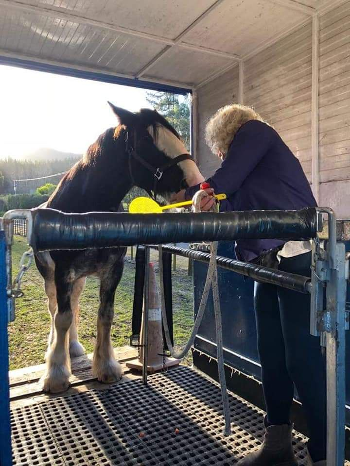 Clicker training/working through problems with your horse photo 1