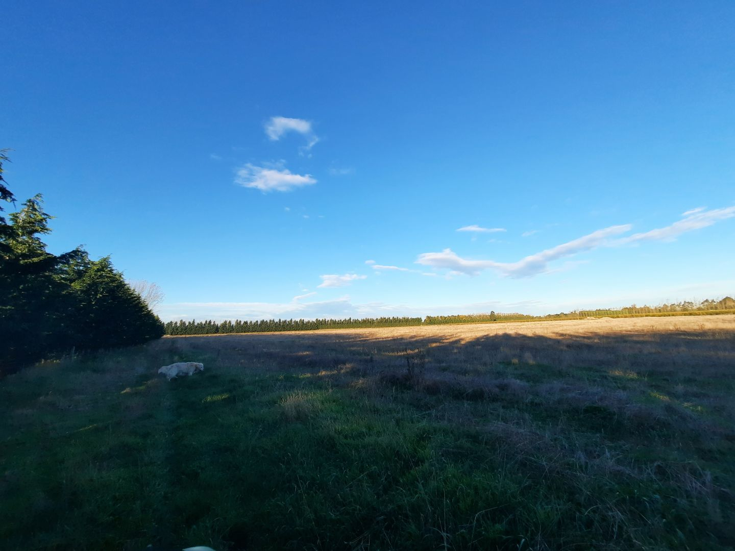 $119 per hectare. Shared land almost in town (Ashburton). photo 2